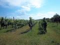 Prodej vinice, Bořetice, CP 1409 m2
