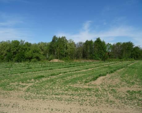 Aukce zemědělských pozemků (4 775 m2) Sedlnice, okr. Nový Jičín