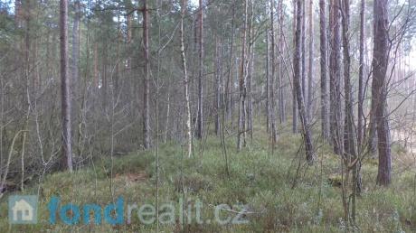 Prodej lesního pozemku Rapšach